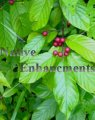 Carolina Buckthorn - Rhamnus caroliniana 5 gallon